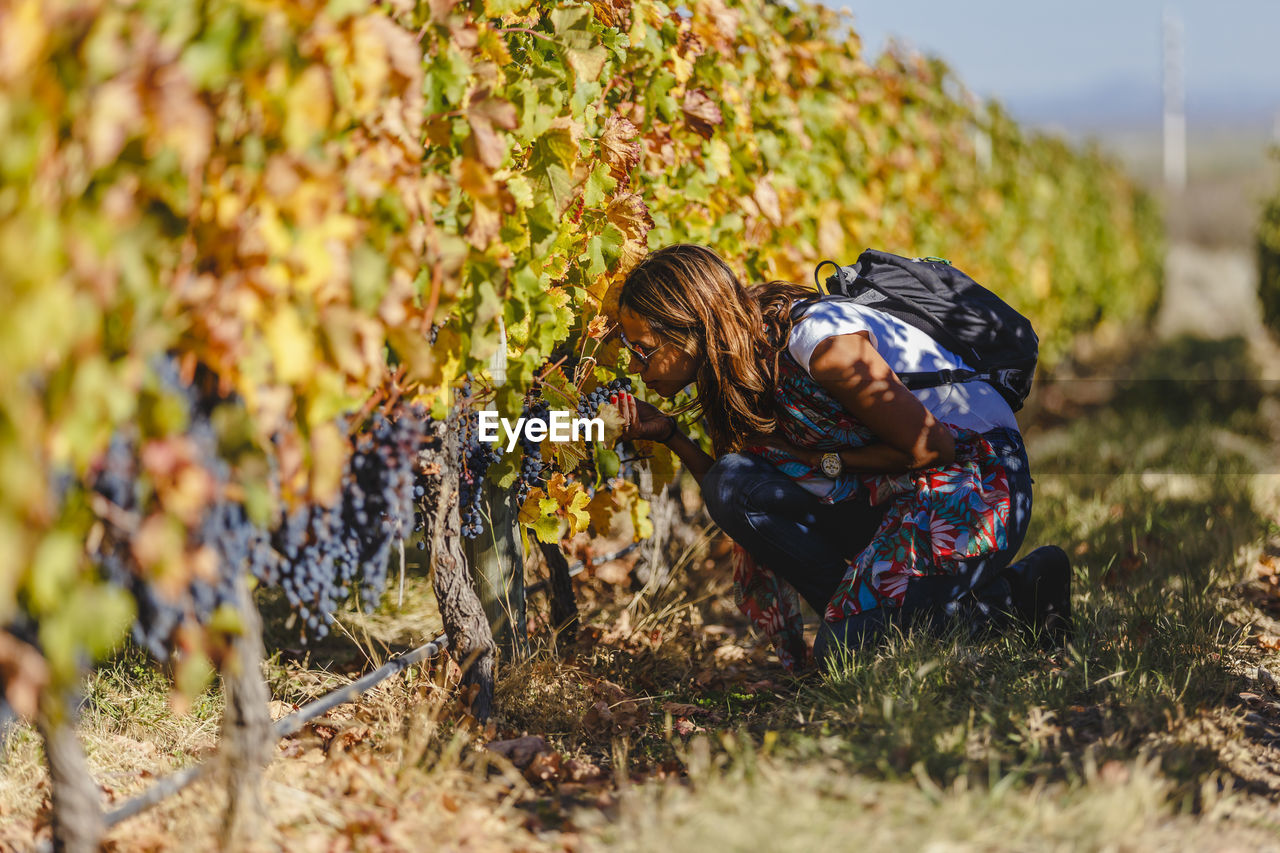 Woman smelling grapes at vineyard