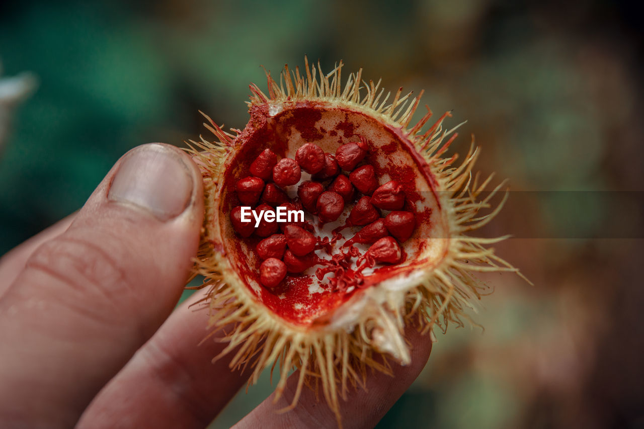 hand, human hand, holding, food and drink, one person, human body part, close-up, freshness, red, healthy eating, real people, food, fruit, wellbeing, focus on foreground, unrecognizable person, body part, finger, day, human finger, spiky