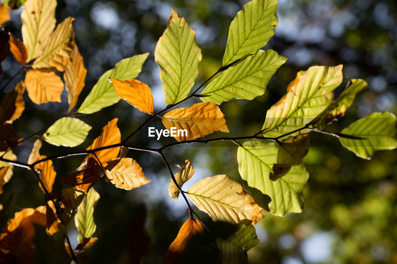 leaf, growth, nature, focus on foreground, outdoors, day, beauty in nature, plant, tree, green color, sunlight, branch, no people, close-up, freshness