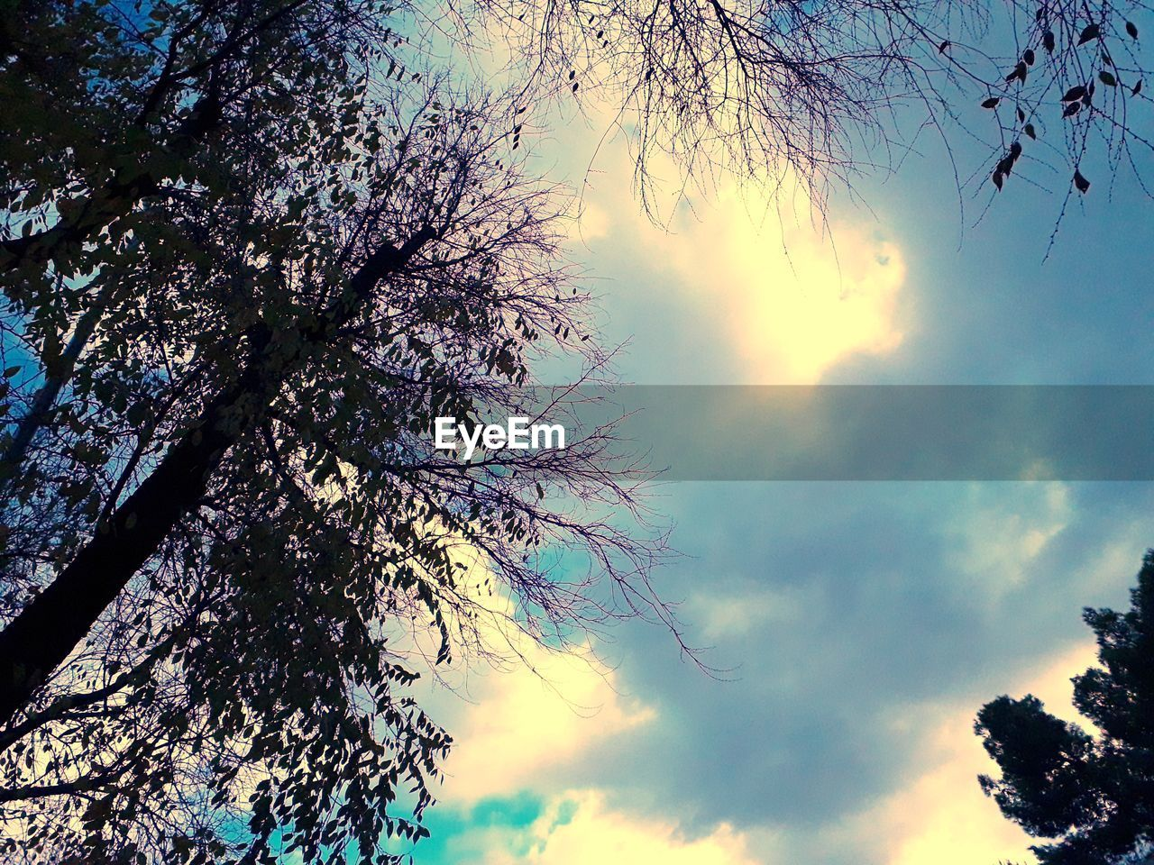 tree, sky, plant, beauty in nature, low angle view, cloud - sky, nature, tranquility, branch, growth, sunset, silhouette, no people, tranquil scene, scenics - nature, outdoors, day, sunlight, tree trunk, trunk, treetop, tree canopy, directly below
