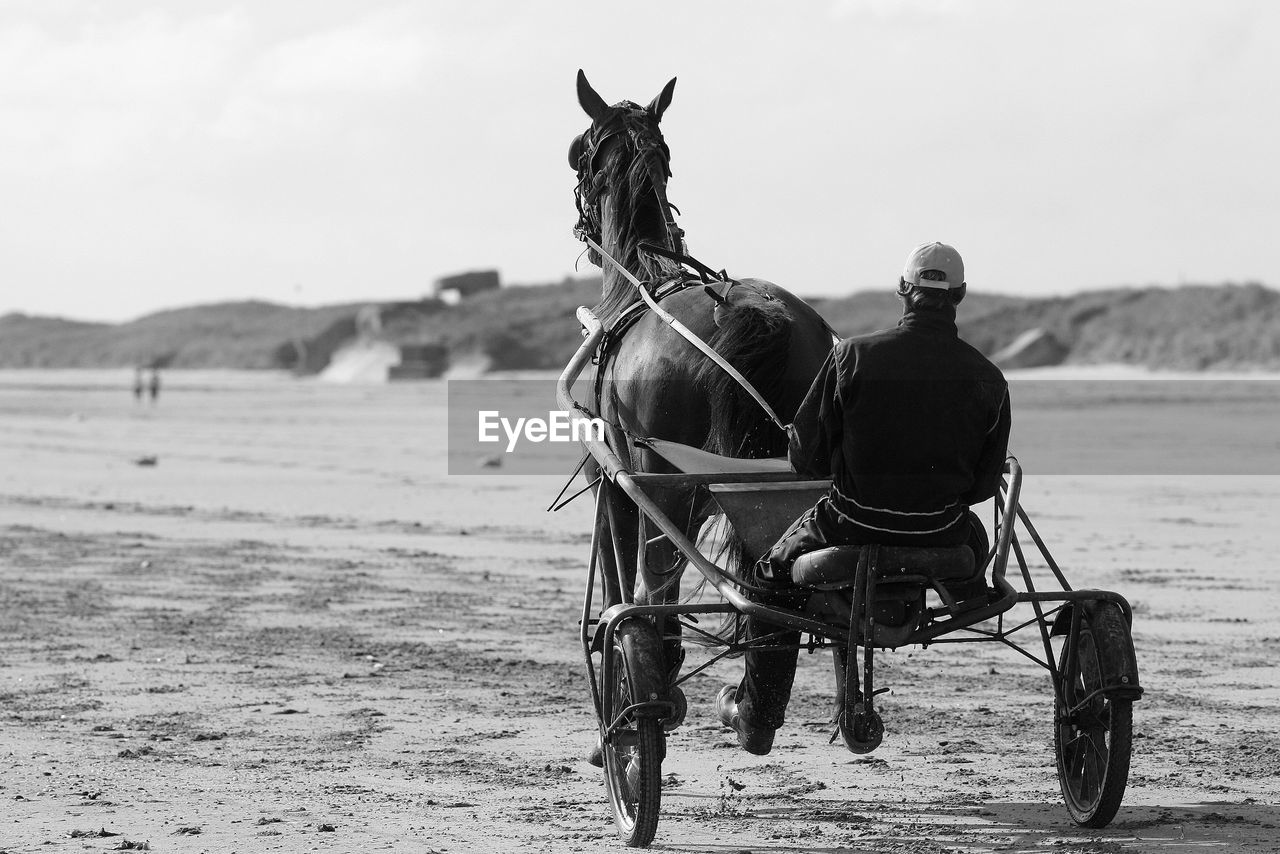 Man riding horse cart on sand at beach
