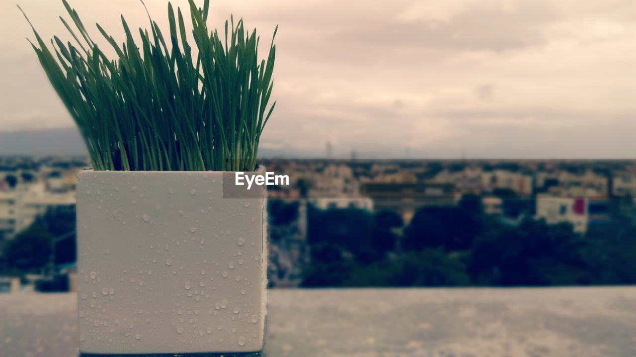 focus on foreground, no people, close-up, nature, day, sky, outdoors