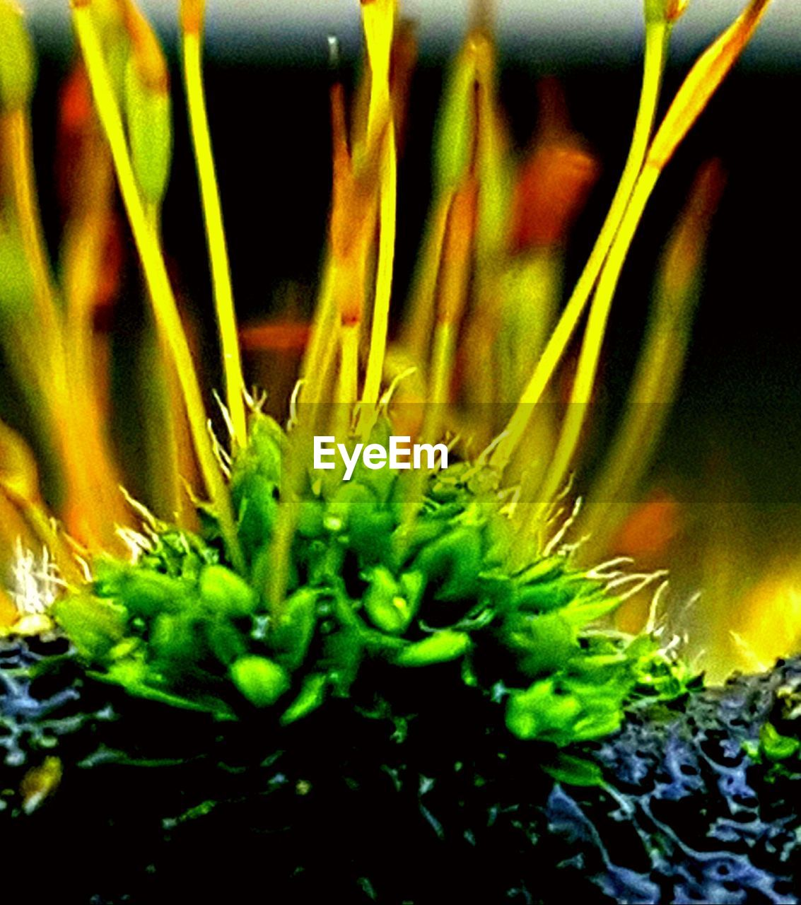 growth, green color, plant, close-up, nature, no people, beauty in nature, freshness, day, outdoors, fragility, undersea