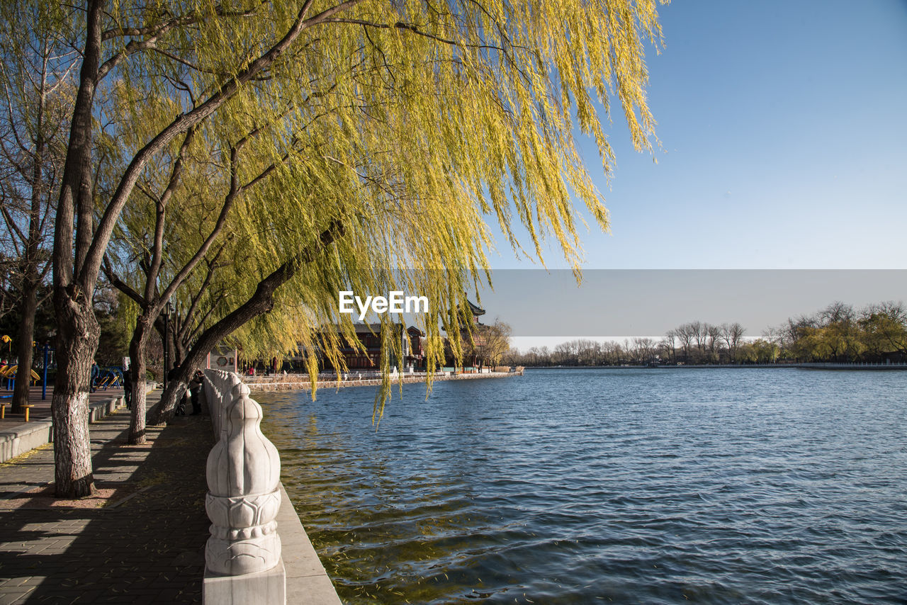 tree, water, plant, beauty in nature, nature, sky, scenics - nature, tranquility, day, tranquil scene, lake, growth, no people, outdoors, waterfront, sunlight, non-urban scene