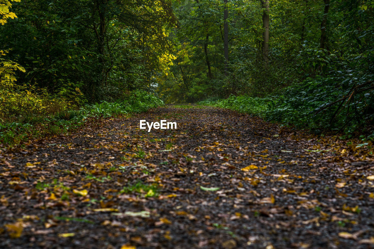 autumn, leaf, forest, nature, tree, woodland, change, outdoors, day, beauty in nature, tranquility, the way forward, scenics, single lane road, no people, road, curve, growth