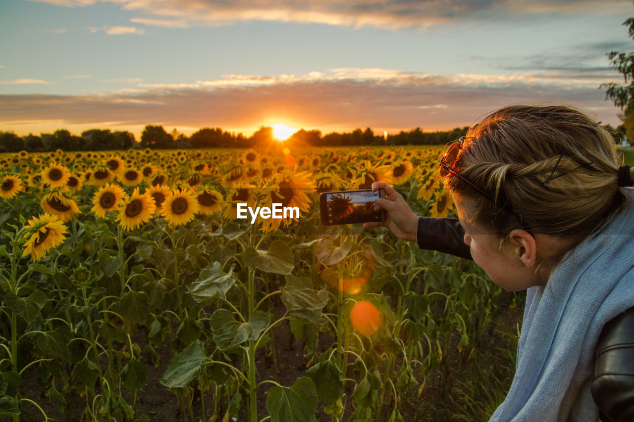 Woman photographing sunflowers with smart phone on field against sky during sunset