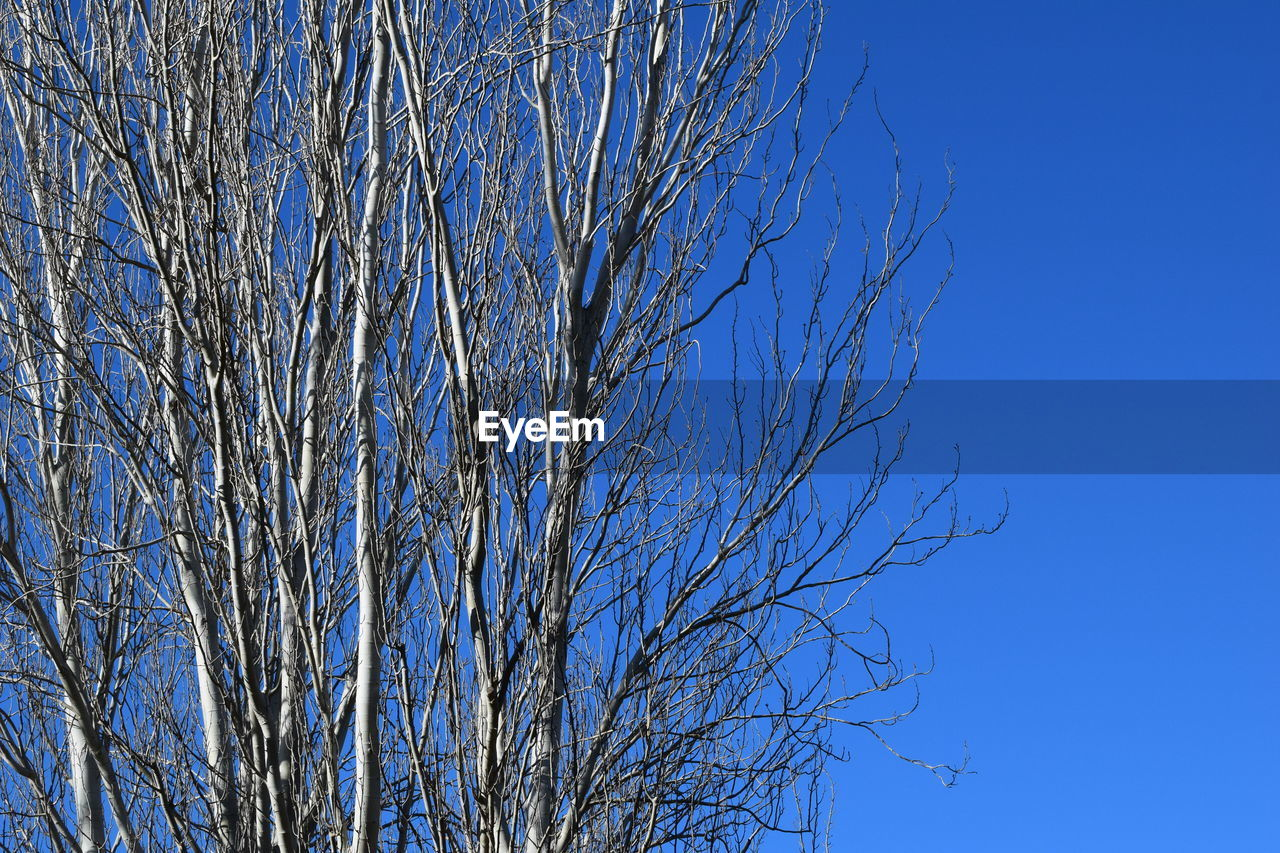 bare tree, tree, branch, blue, clear sky, nature, tranquility, low angle view, beauty in nature, day, no people, outdoors, tranquil scene, dried plant, scenics, sky