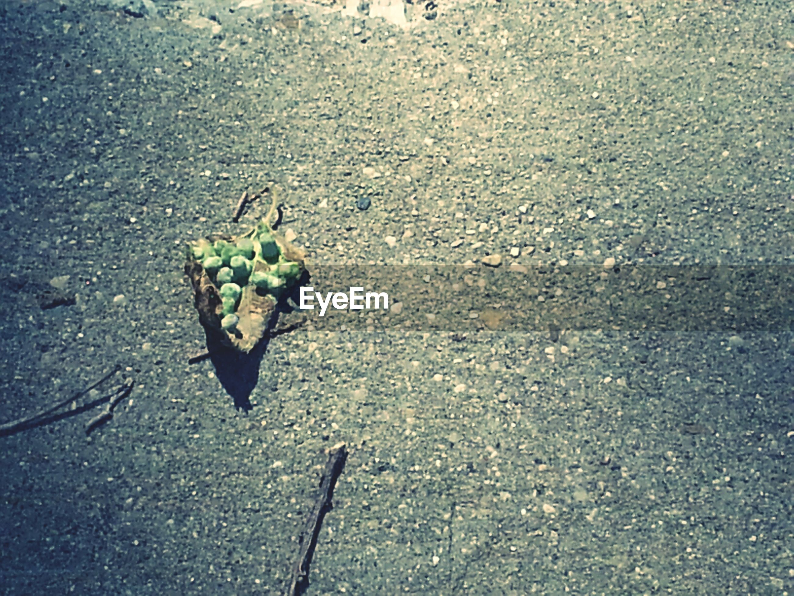 high angle view, leaf, street, asphalt, nature, plant, road, ground, day, outdoors, close-up, no people, growth, dry, textured, sunlight, sidewalk, fragility, shadow, transportation