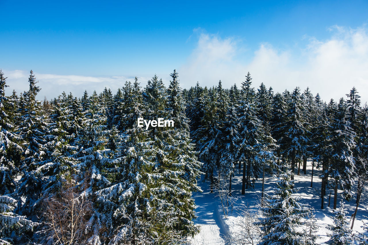 cold temperature, winter, snow, tree, plant, sky, beauty in nature, tranquility, tranquil scene, growth, no people, covering, nature, scenics - nature, non-urban scene, day, frozen, land, white color, coniferous tree