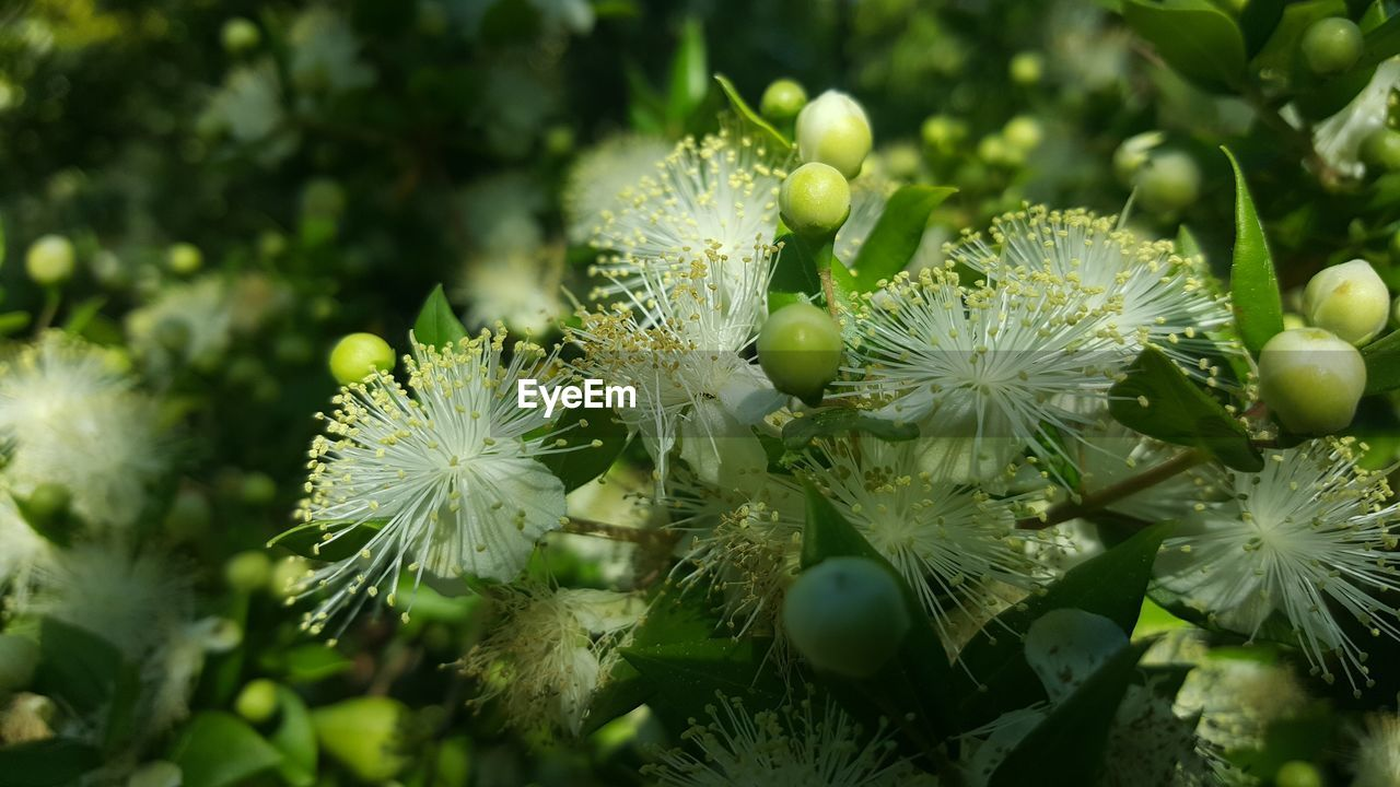 growth, plant, flower, beauty in nature, flowering plant, freshness, close-up, fragility, vulnerability, no people, nature, green color, day, selective focus, flower head, petal, inflorescence, outdoors, plant part, leaf