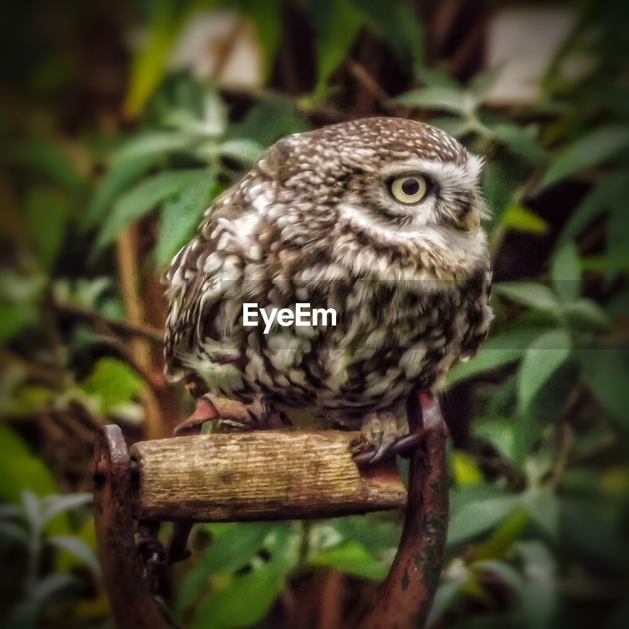 one animal, animal themes, bird, animals in the wild, perching, animal wildlife, focus on foreground, no people, close-up, day, nature, outdoors, bird of prey