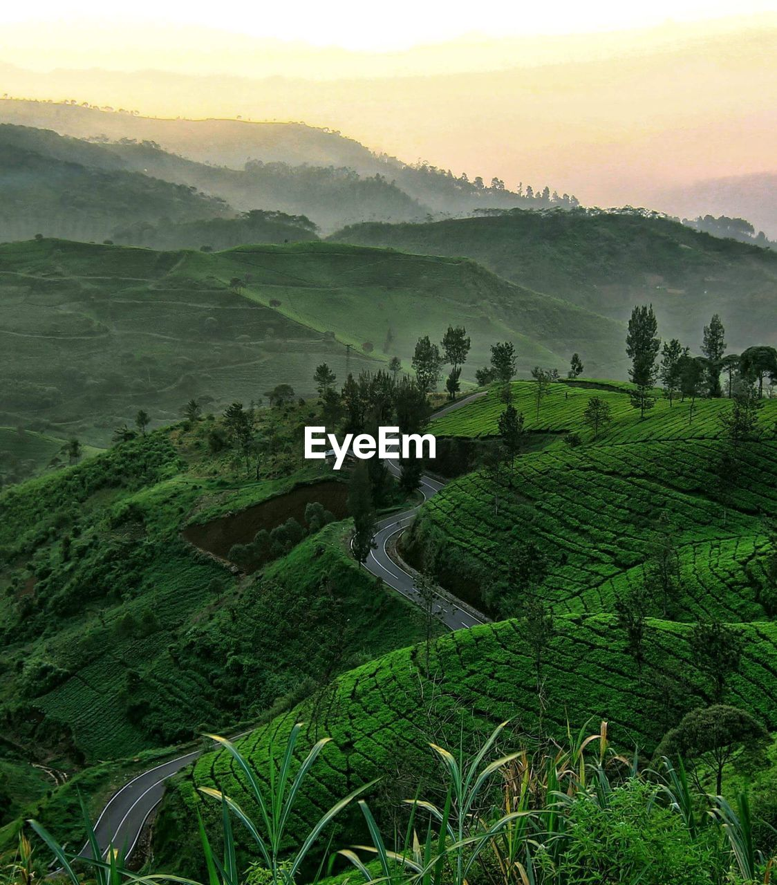 Scenic View Of Tea Plantation On Mountains Against Sky During Sunset