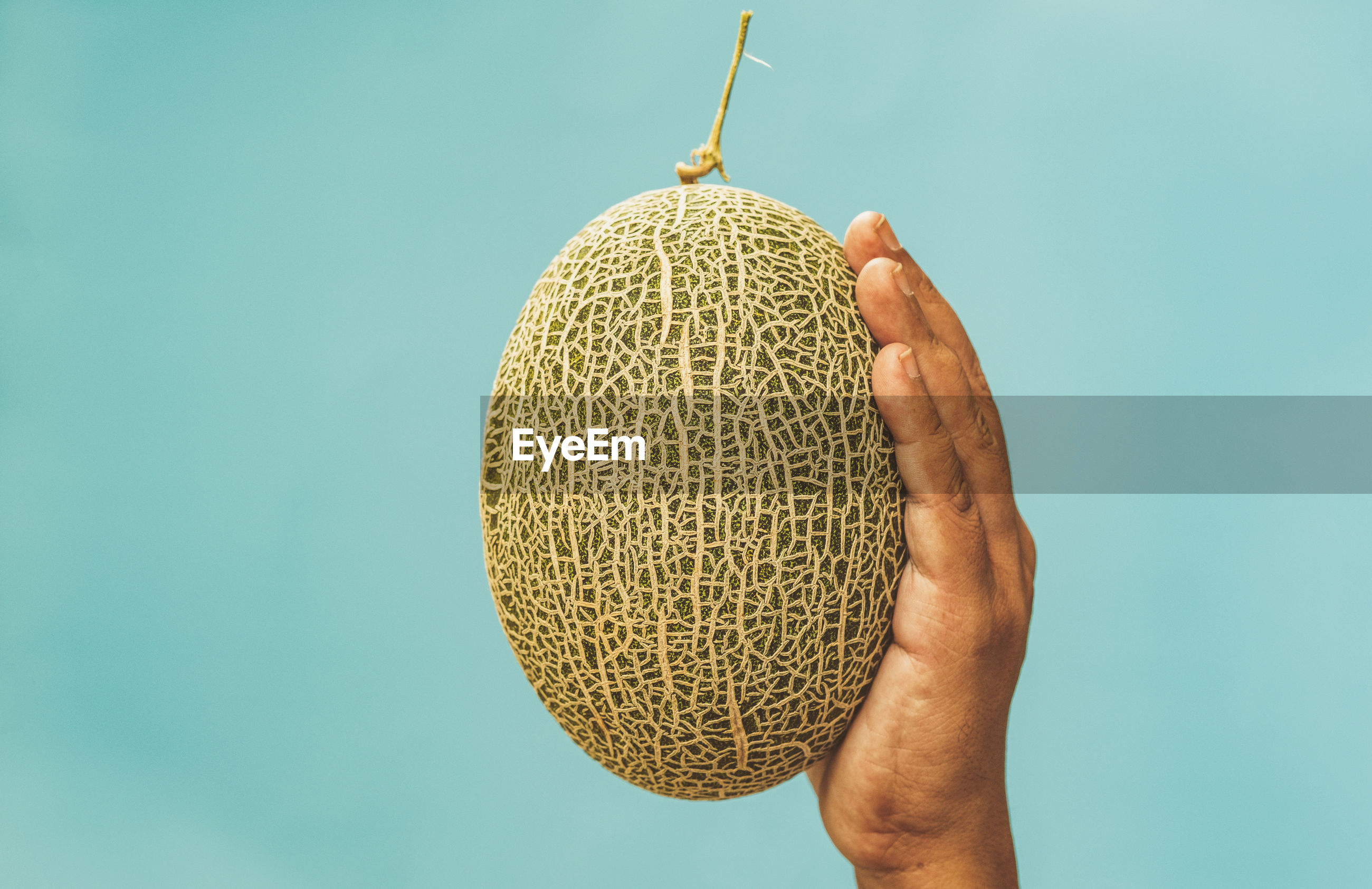 Close-up of hand holding melon fruit