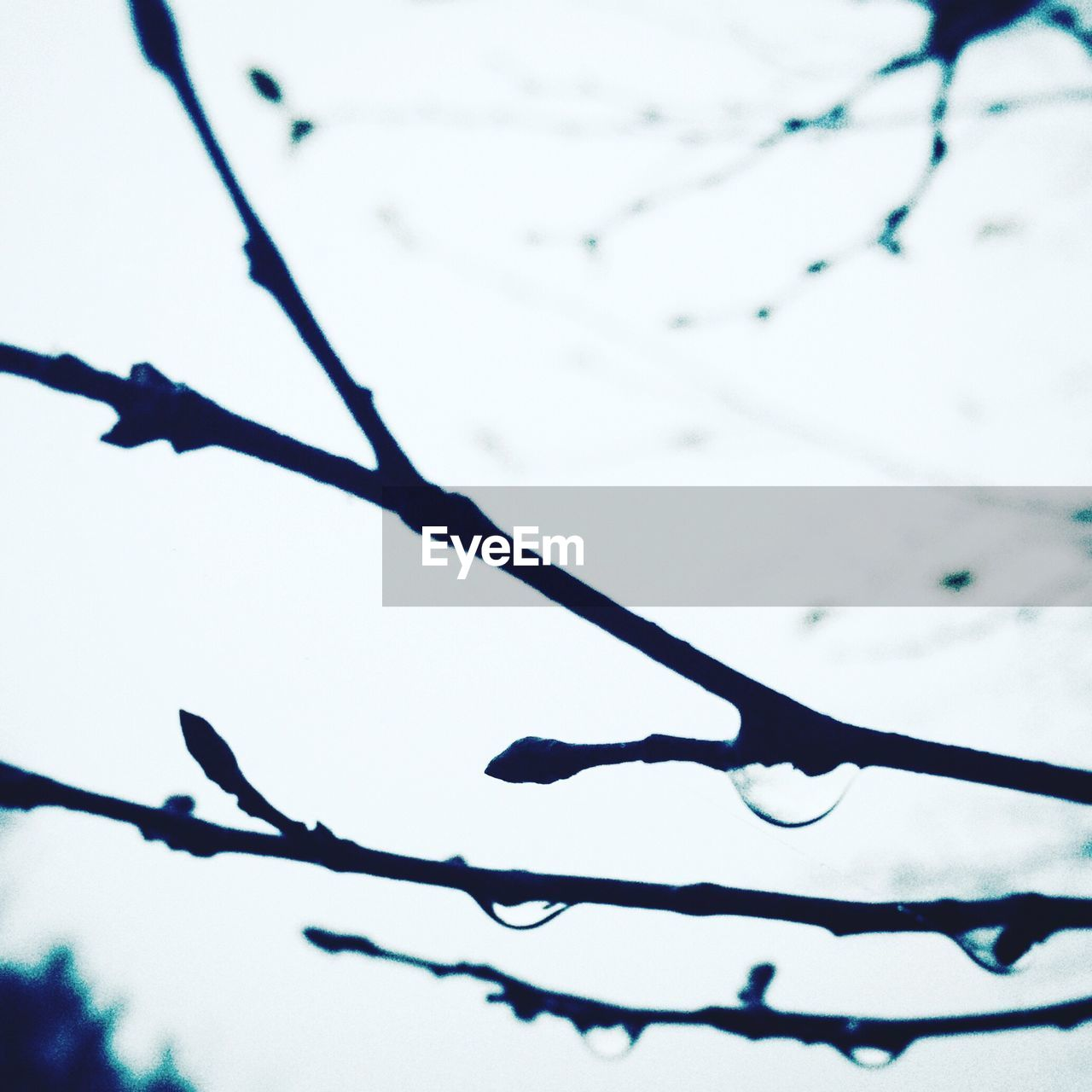 Close-Up Of Water Drops On Branches Against Blurred Background