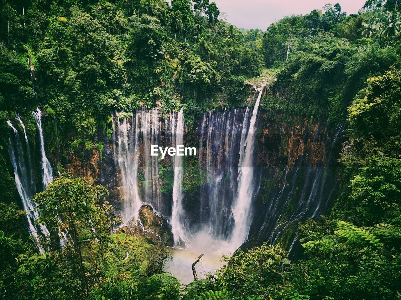 waterfall, plant, scenics - nature, tree, water, beauty in nature, flowing water, motion, forest, nature, land, growth, long exposure, rock, green color, blurred motion, environment, non-urban scene, rock - object, no people, outdoors, rainforest, power in nature, flowing, falling water