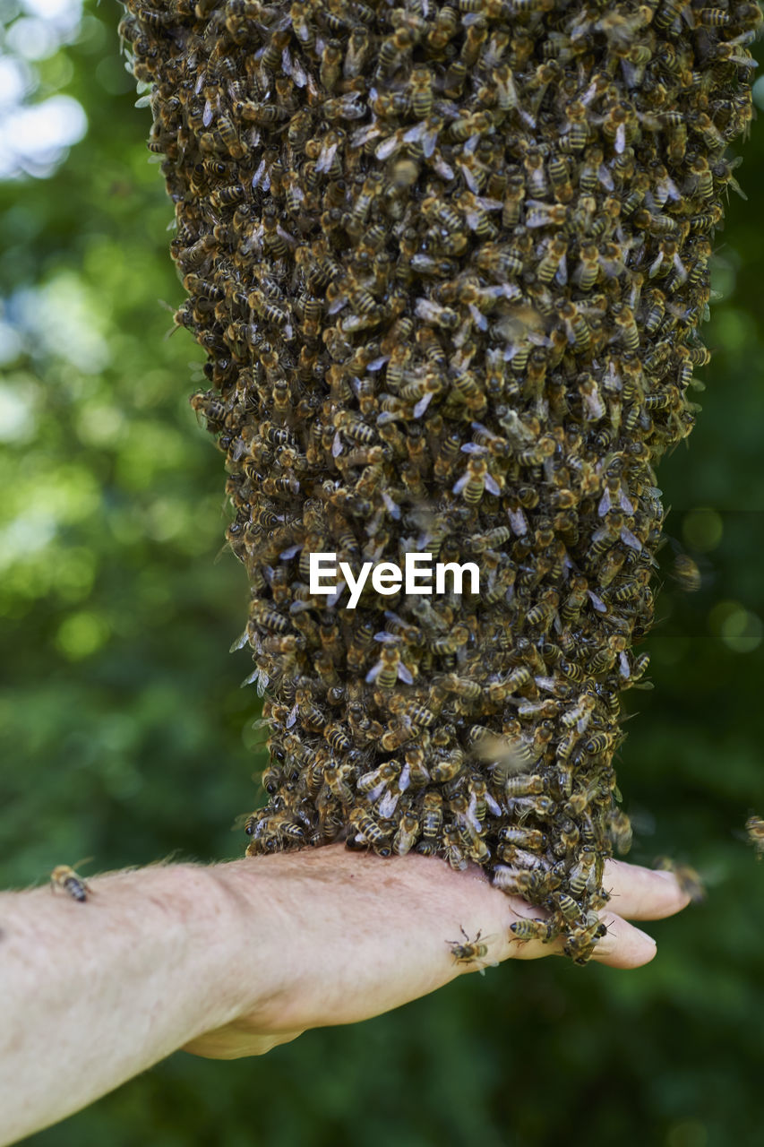 Bee Colony On A Tree Touched By Hand