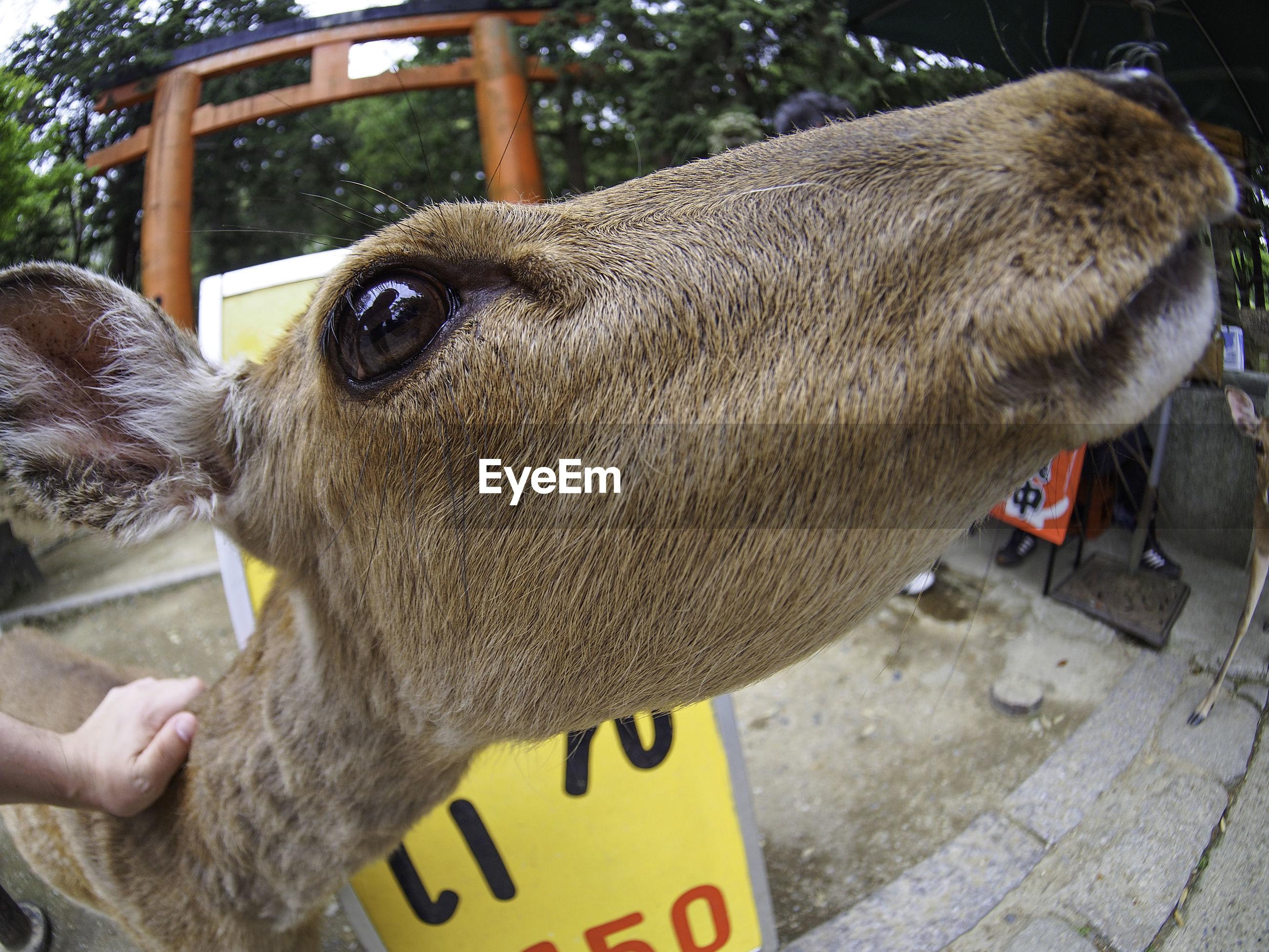 Fish-eye lens view of deer