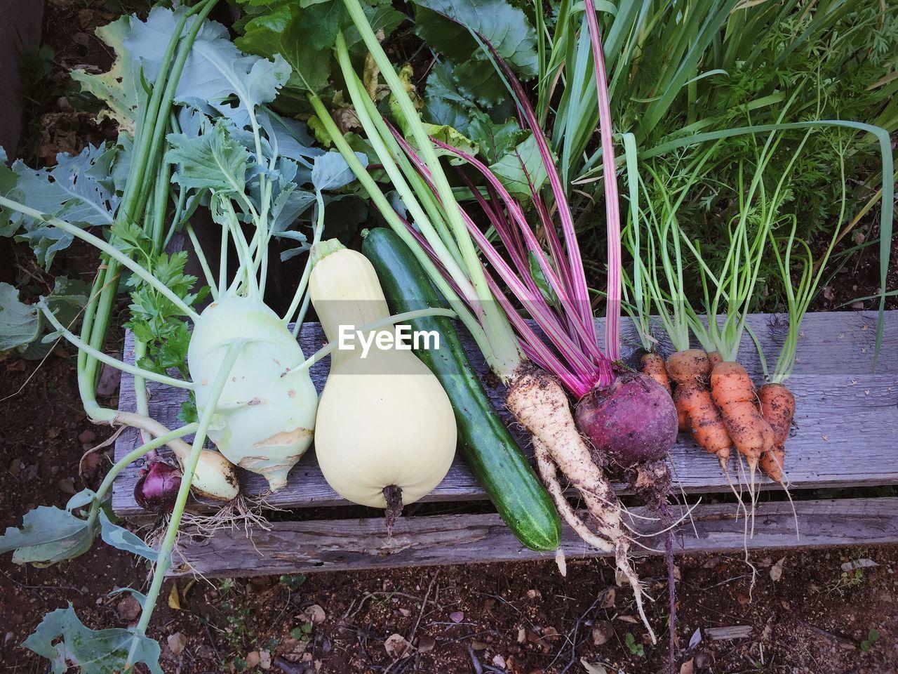 Close-up of harvested vegetables