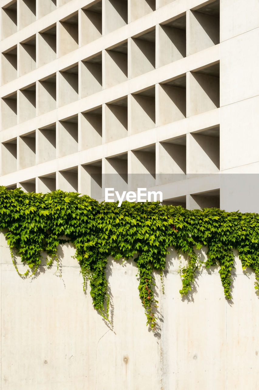 no people, built structure, green color, plant, pattern, growth, architecture, window, wall - building feature, outdoors, day, building exterior, close-up, nature, low angle view, hole, full frame, wall, potted plant