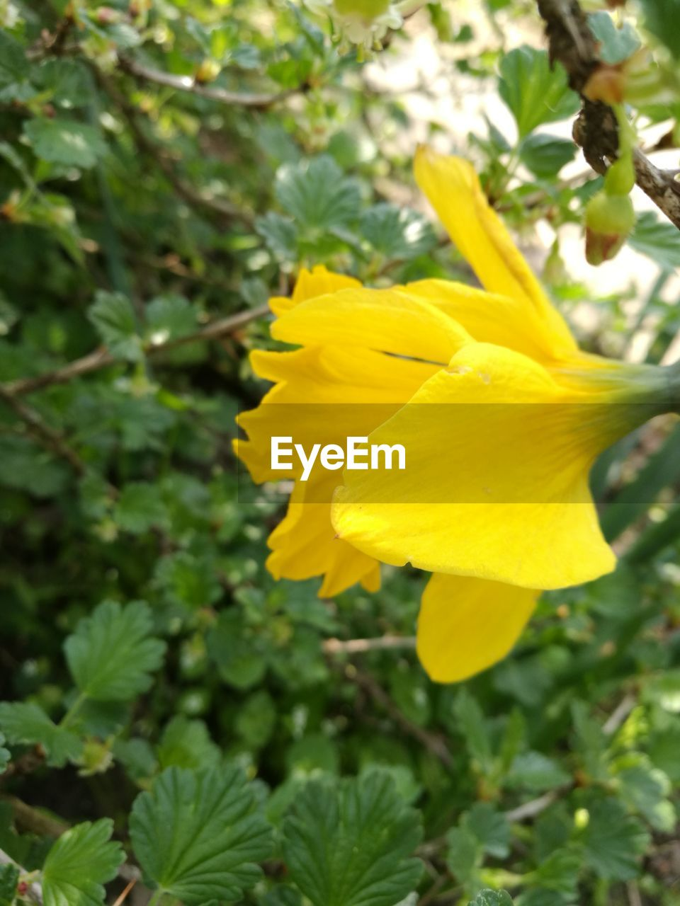 yellow, flower, petal, growth, nature, fragility, beauty in nature, freshness, plant, botany, flower head, green color, day, leaf, outdoors, blossom, no people, springtime, blooming, close-up
