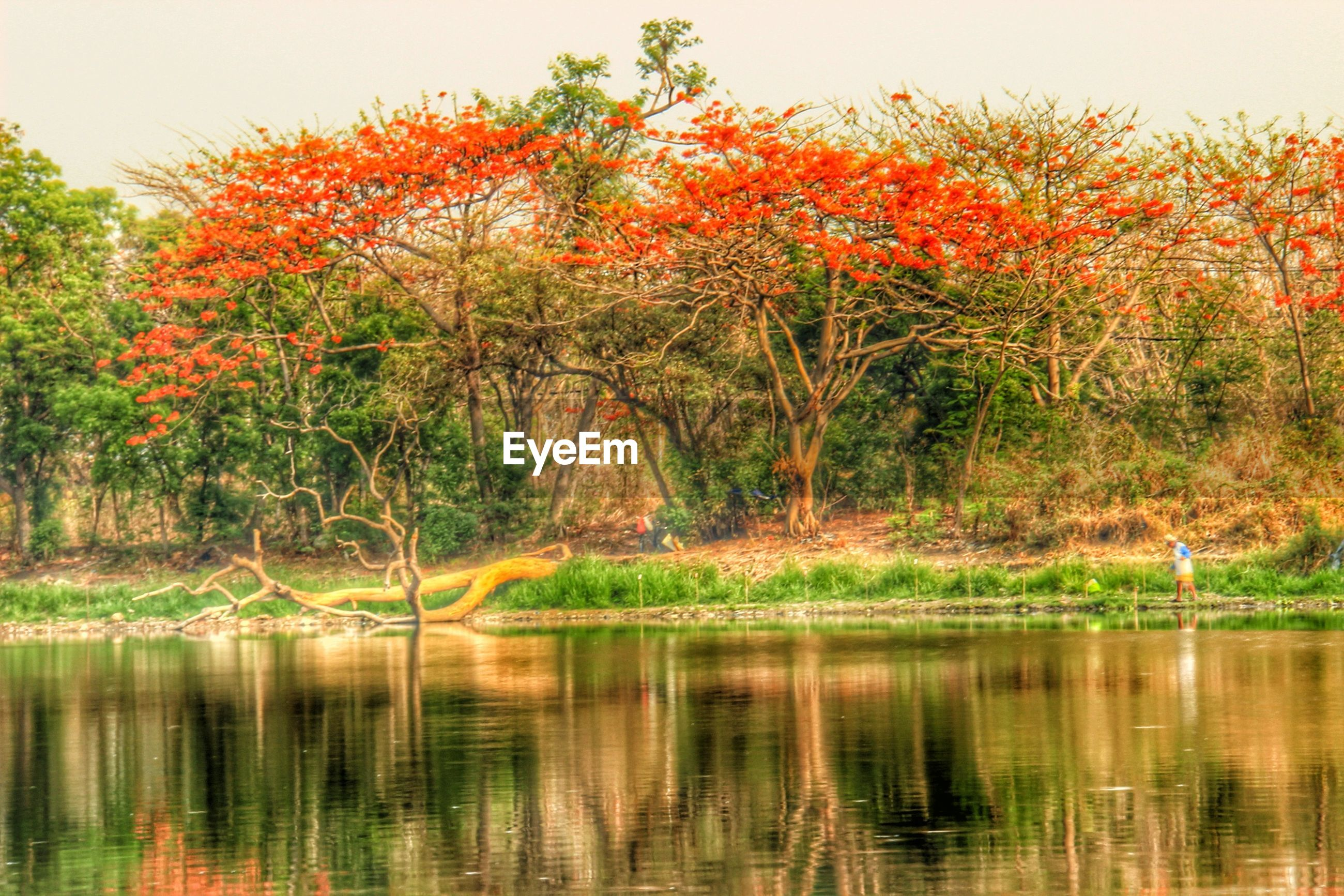 tree, water, reflection, lake, tranquility, tranquil scene, beauty in nature, waterfront, scenics, nature, autumn, change, growth, idyllic, clear sky, orange color, calm, river, outdoors, season