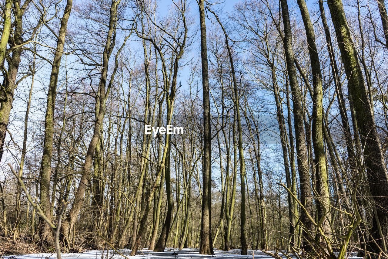tree, nature, bare tree, tranquility, winter, tranquil scene, no people, beauty in nature, cold temperature, forest, outdoors, day, branch, snow, scenics, tree trunk, landscape, sky