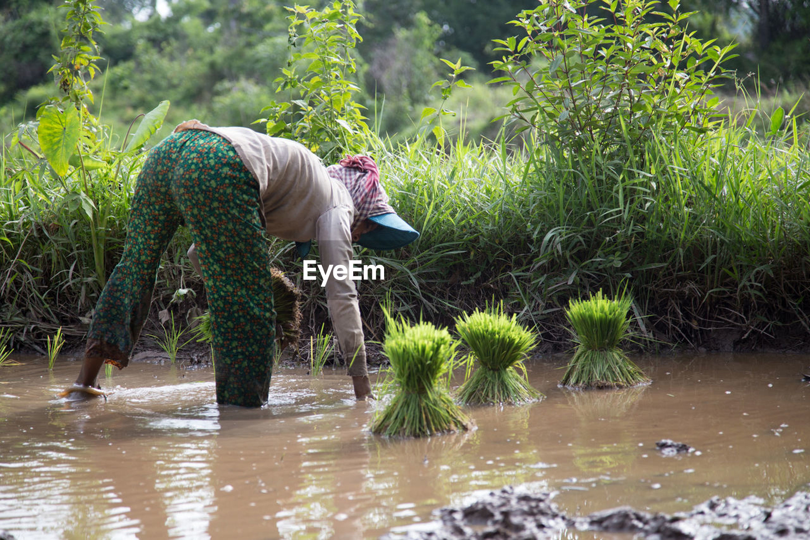 one person, water, working, standing, holding, full length, outdoors, day, agriculture, real people, farmer, occupation, adults only, nature, one man only, only men, adult, men, ankle deep in water, rural scene, people