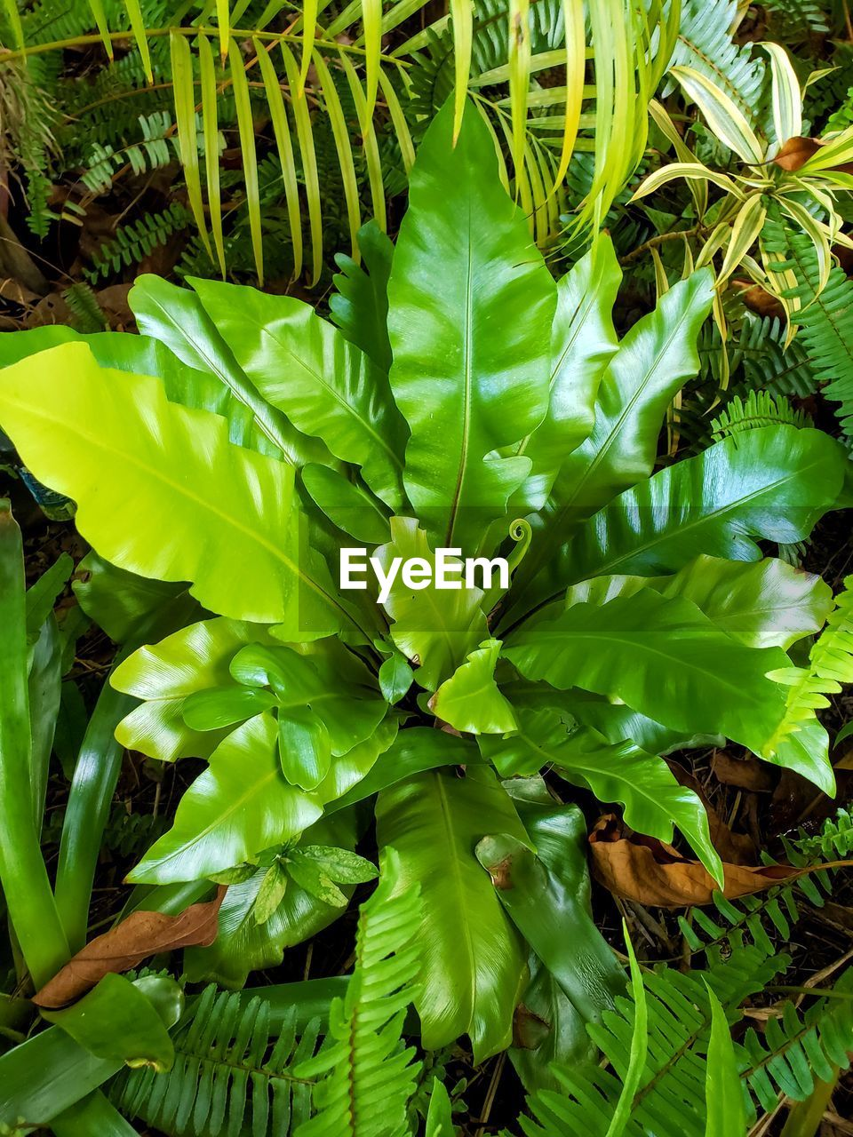 green color, growth, plant, plant part, leaf, beauty in nature, nature, day, no people, close-up, outdoors, freshness, tranquility, full frame, sunlight, high angle view, backgrounds, land, green, natural pattern
