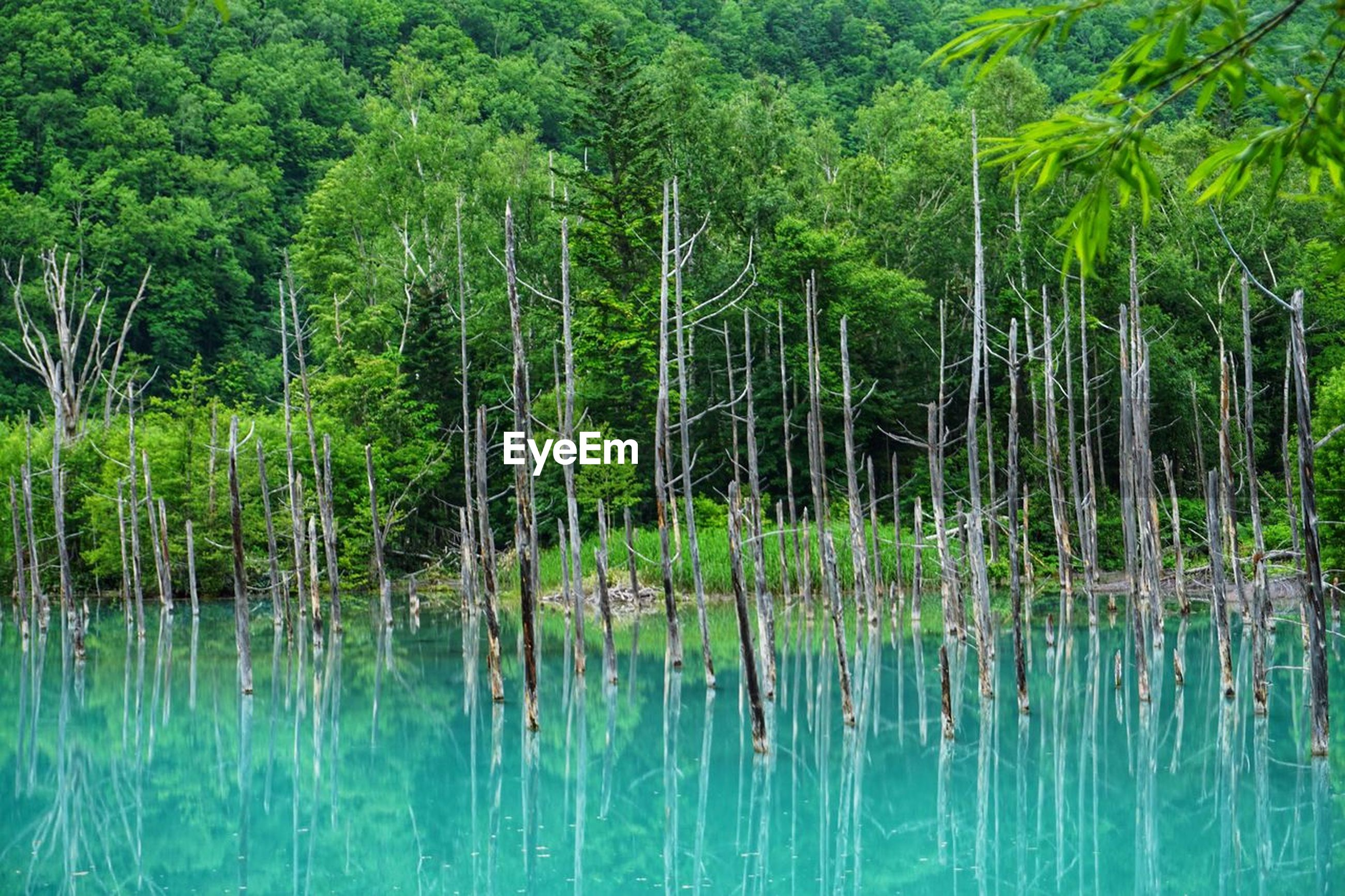 tree, plant, water, forest, green color, reflection, beauty in nature, land, nature, tranquility, no people, scenics - nature, lake, day, tranquil scene, growth, foliage, lush foliage, environment, woodland, outdoors, rainforest, swamp, bamboo - plant, turquoise colored