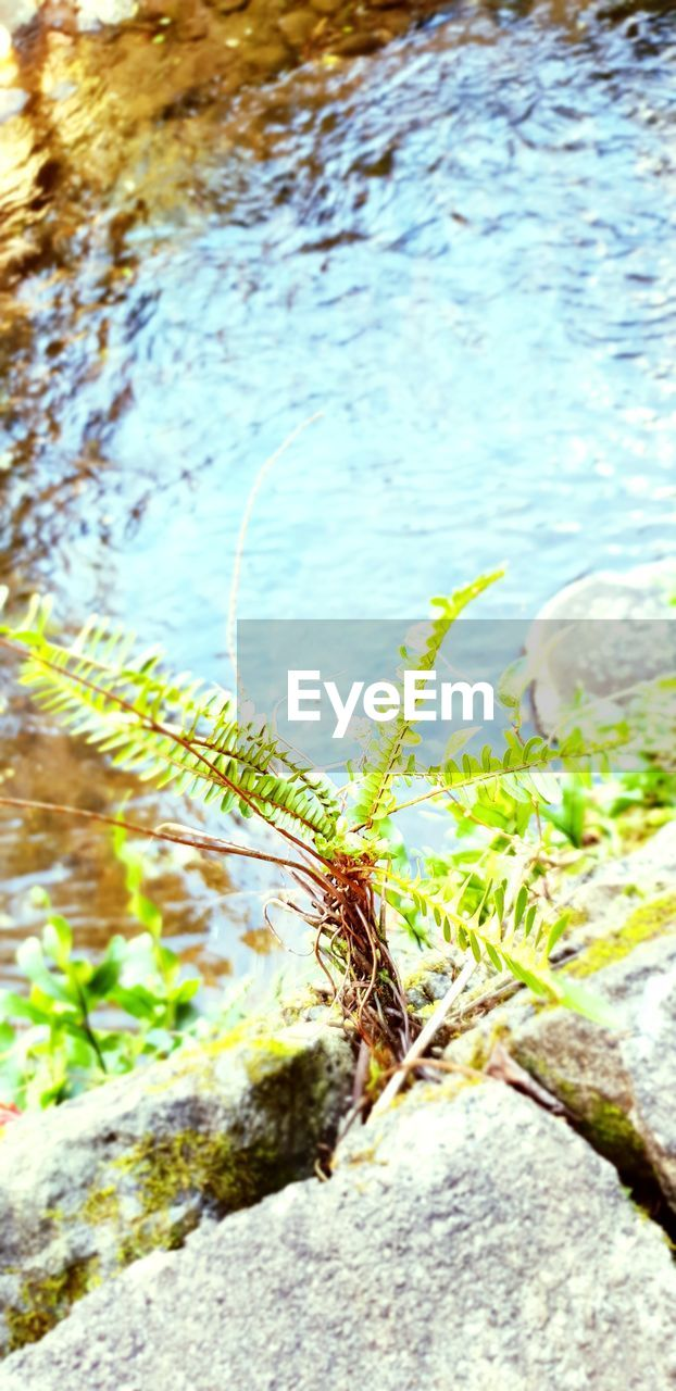 nature, green color, water, plant, day, growth, close-up, no people, outdoors, animal wildlife, rock, leaf, animals in the wild, one animal, rock - object, animal themes, beauty in nature, focus on foreground, plant part
