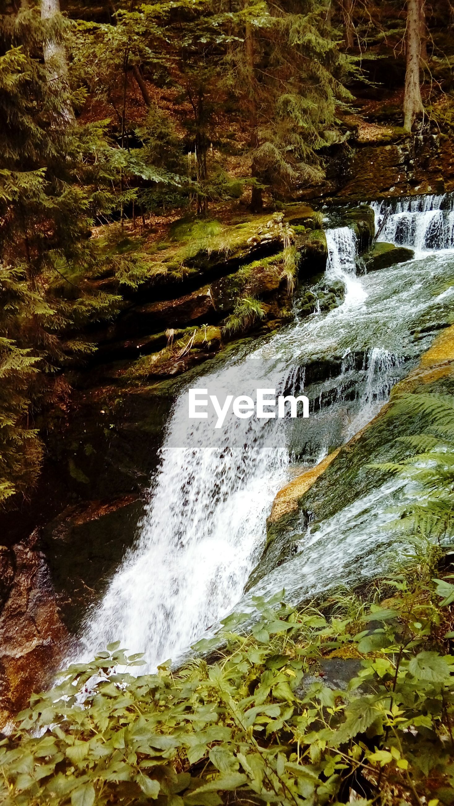 waterfall, motion, water, nature, beauty in nature, long exposure, rock - object, scenics, no people, day, forest, tranquil scene, outdoors, tranquility, tree