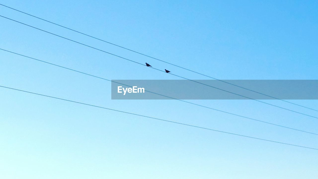 Low Angle View Of Silhouette Birds On Power Line Against Clear Blue Sky