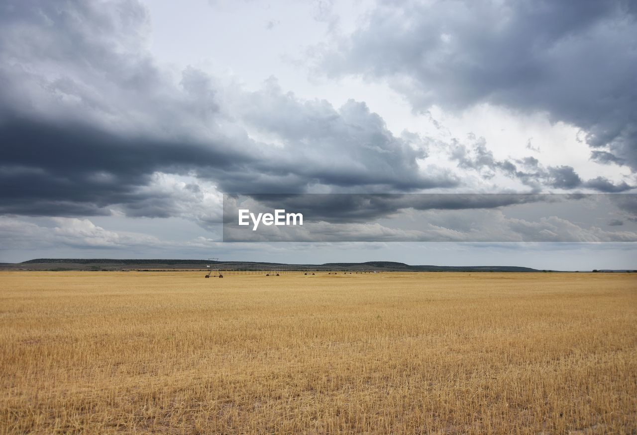 landscape, field, nature, sky, cloud - sky, tranquility, beauty in nature, tranquil scene, day, no people, scenics, horizon over land, outdoors, rural scene, animal themes, mammal