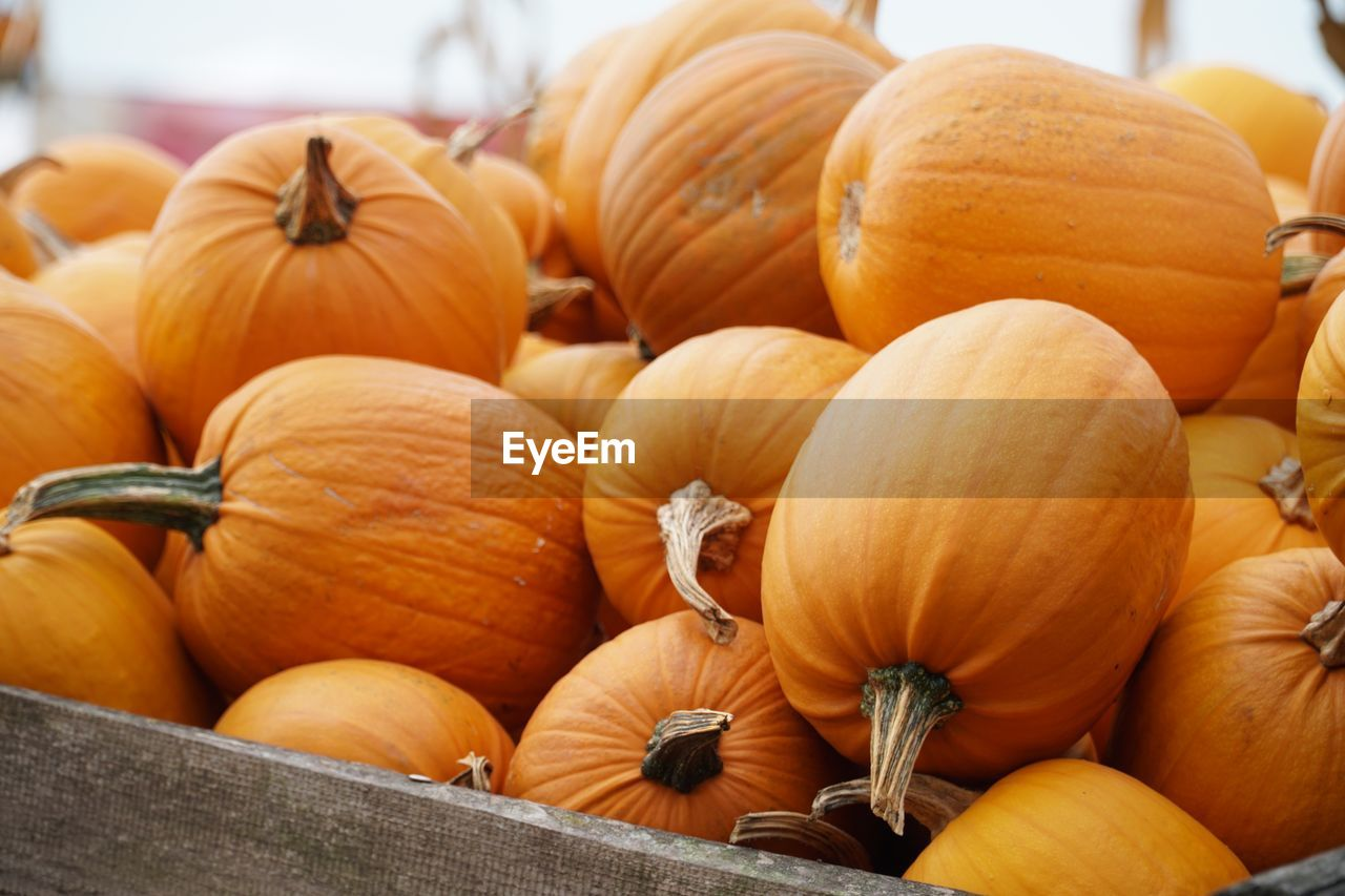food, food and drink, pumpkin, healthy eating, freshness, wellbeing, orange color, vegetable, large group of objects, no people, retail, close-up, for sale, abundance, market, still life, market stall, day, focus on foreground, raw food, outdoors, retail display
