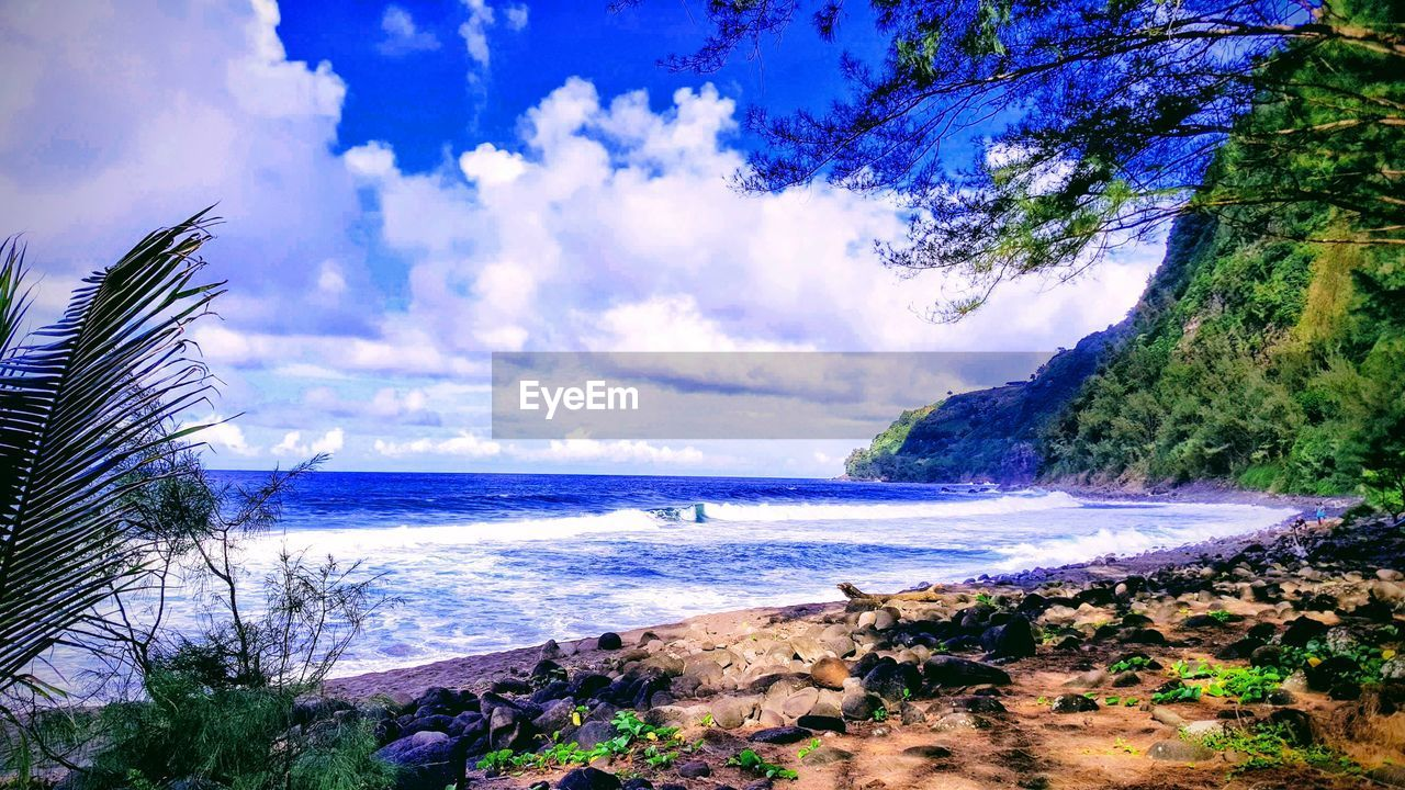 water, sky, sea, plant, cloud - sky, tree, beach, beauty in nature, scenics - nature, land, tranquility, tranquil scene, nature, day, no people, horizon, horizon over water, growth, outdoors, bay