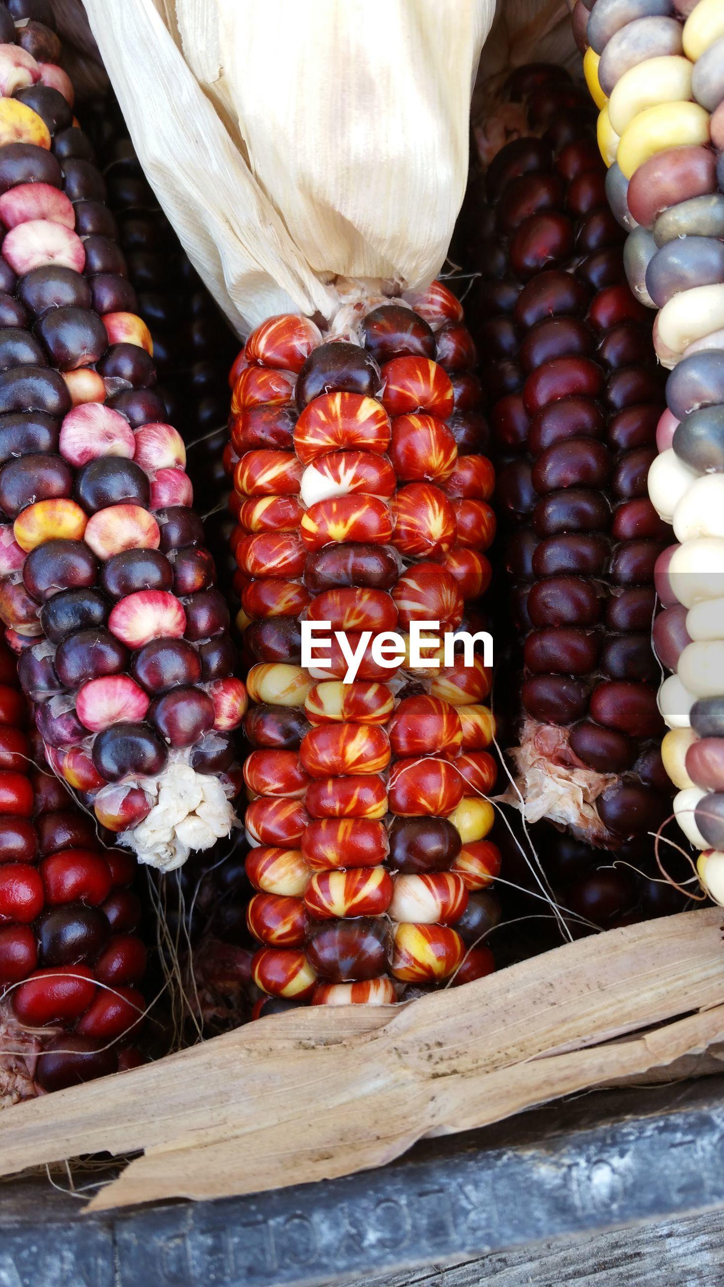 High angle view of corns