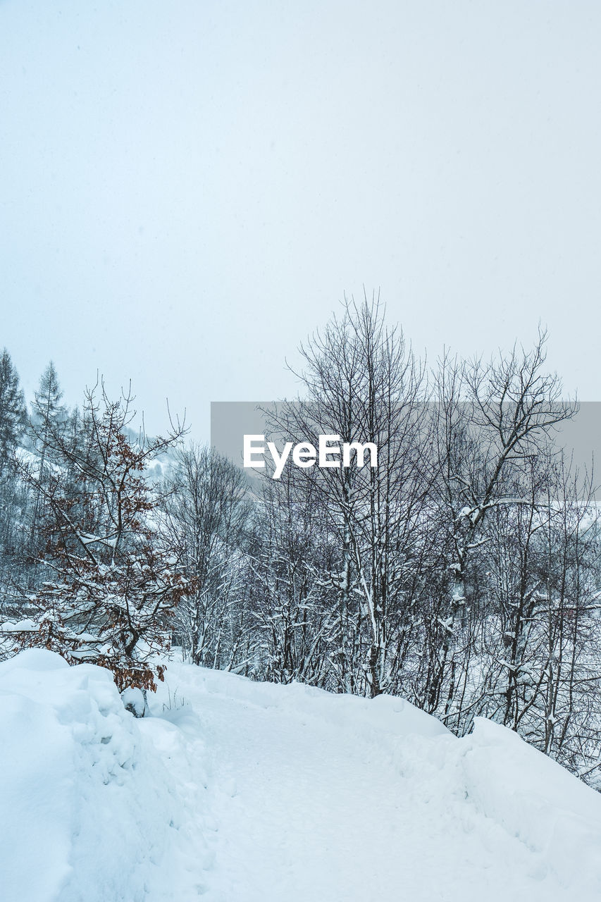 snow, cold temperature, winter, tree, sky, beauty in nature, white color, nature, plant, bare tree, no people, day, tranquility, scenics - nature, covering, field, land, tranquil scene, clear sky, outdoors, extreme weather, snowing