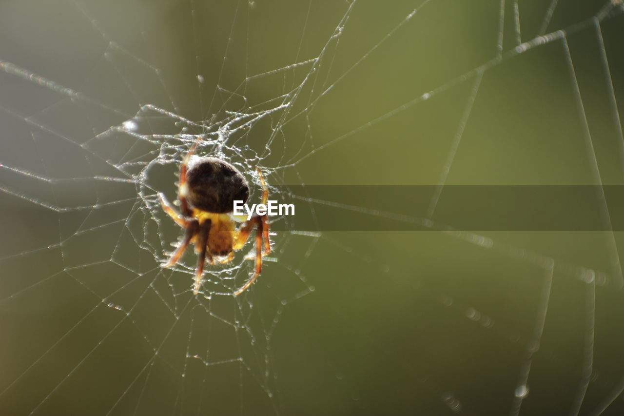 spider web, spider, one animal, animal themes, web, animals in the wild, nature, focus on foreground, close-up, insect, survival, no people, fragility, animal wildlife, outdoors, animal leg, day, beauty in nature