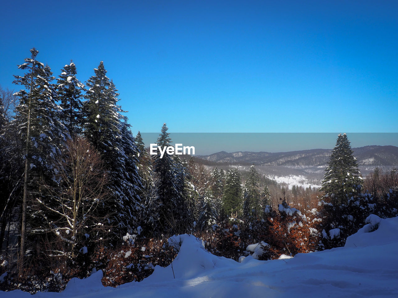 Pine Trees On Snow Covered Mountain Against Blue Sky