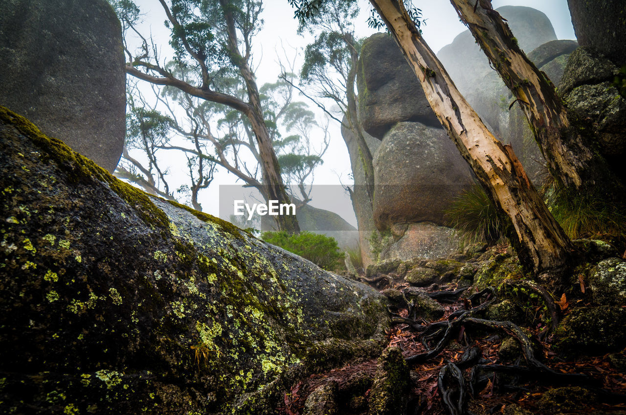 nature, day, mountain, beauty in nature, tranquility, moss, tree, tranquil scene, rock - object, no people, scenics, outdoors, low angle view, sky, forest