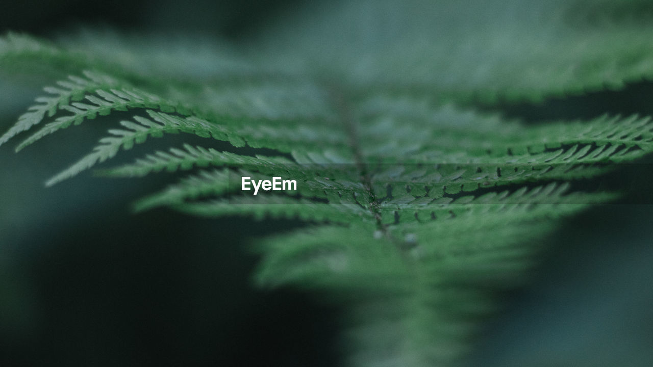 leaf, plant part, selective focus, green color, close-up, growth, plant, nature, no people, beauty in nature, pattern, day, leaf vein, natural pattern, outdoors, fragility, vulnerability, fern, textured, backgrounds, leaves