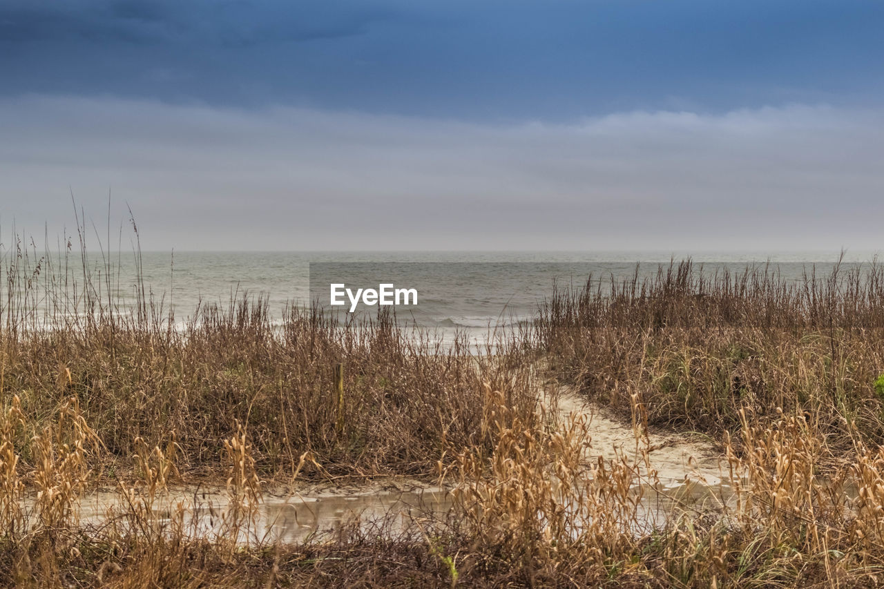 sea, water, horizon over water, marram grass, nature, tranquil scene, beach, scenics, tranquility, grass, sky, beauty in nature, outdoors, cloud - sky, sand, day, no people, growth, travel destinations, vacations, plant, sand dune