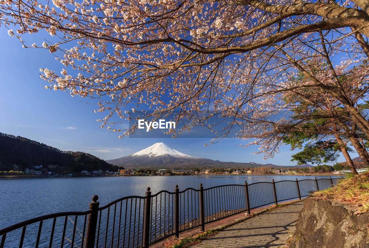 mountain, tree, mountain range, nature, beauty in nature, outdoors, scenics, lake, water, day, no people, sky, branch, blue