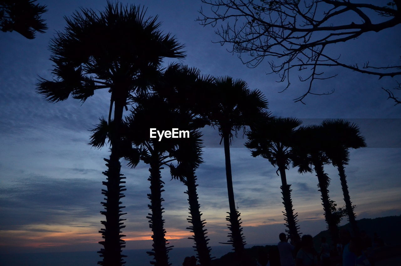 sky, tree, plant, silhouette, cloud - sky, low angle view, beauty in nature, sunset, tranquility, growth, nature, tranquil scene, scenics - nature, no people, dusk, palm tree, outdoors, tree trunk, tropical climate, branch, coconut palm tree, coniferous tree