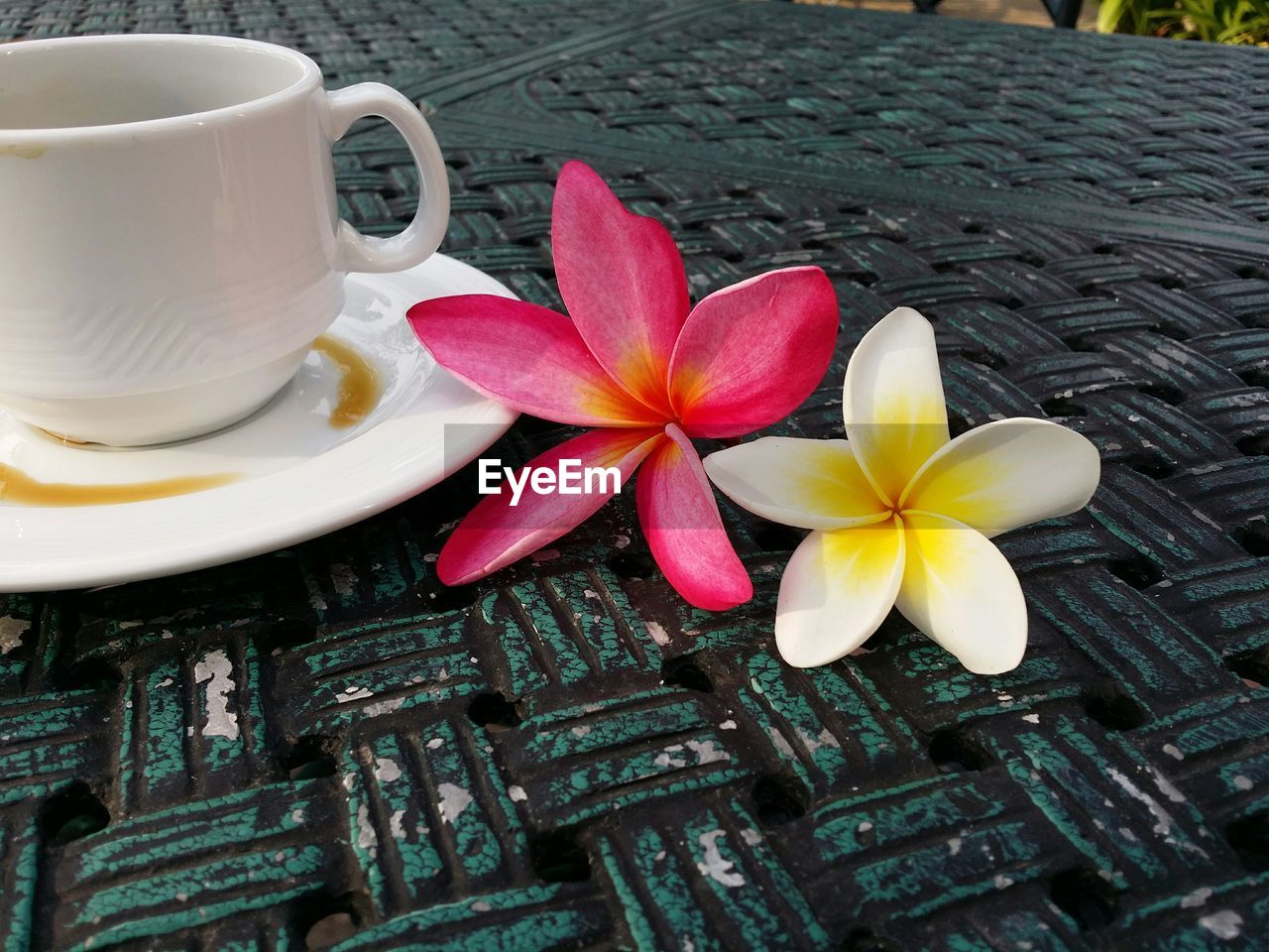 Frangipani flowers by coffee cup on table