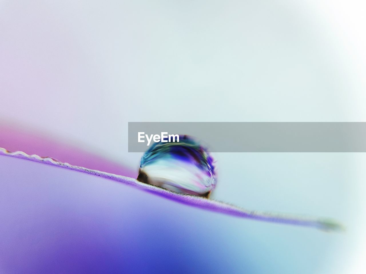 fragility, close-up, nature, no people, studio shot, beauty in nature, water, white background, day, freshness, outdoors