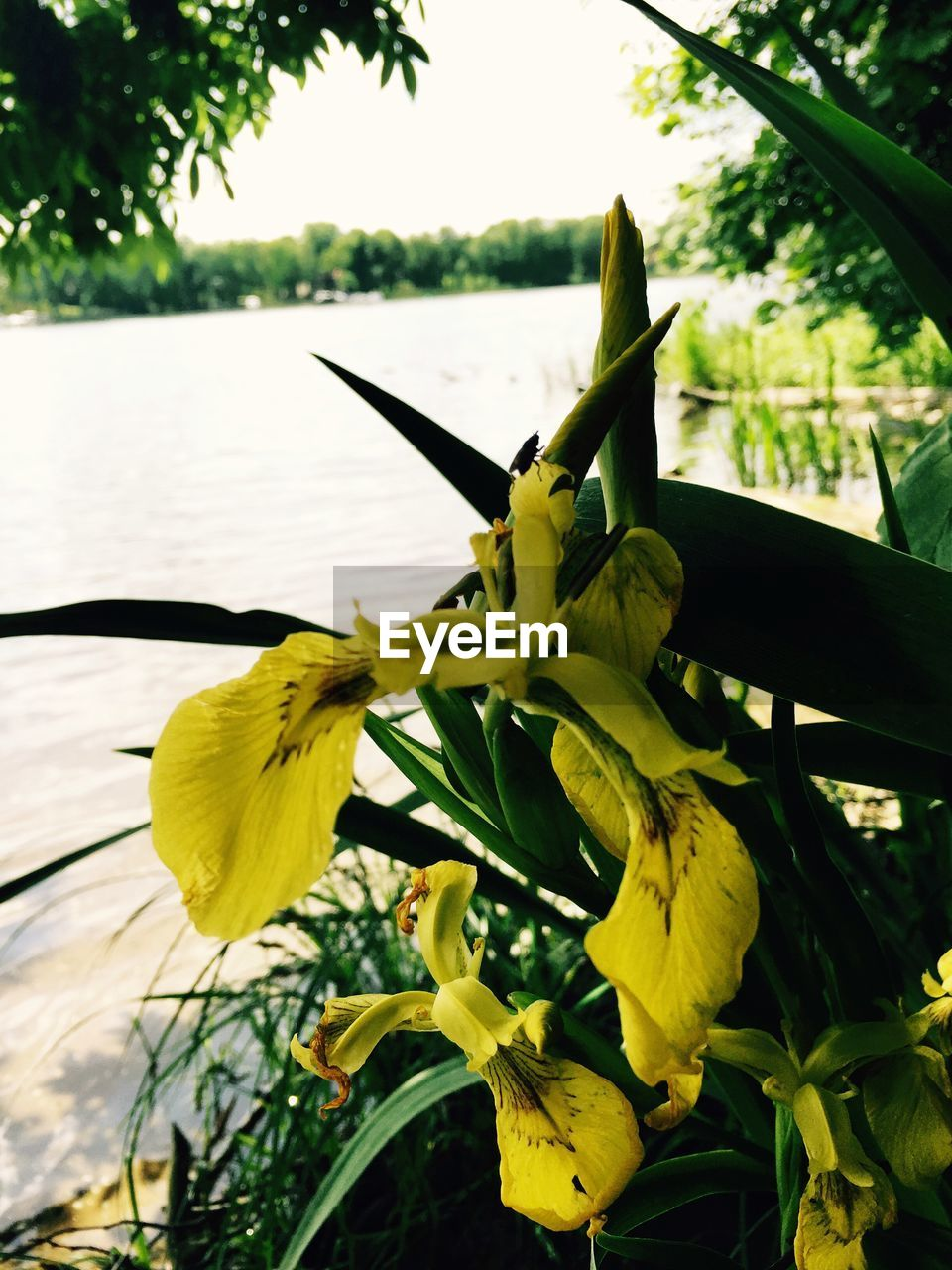 growth, nature, plant, flower, tree, beauty in nature, no people, day, freshness, outdoors, close-up, leaf, focus on foreground, petal, fragility, green color, flower head, water, sky