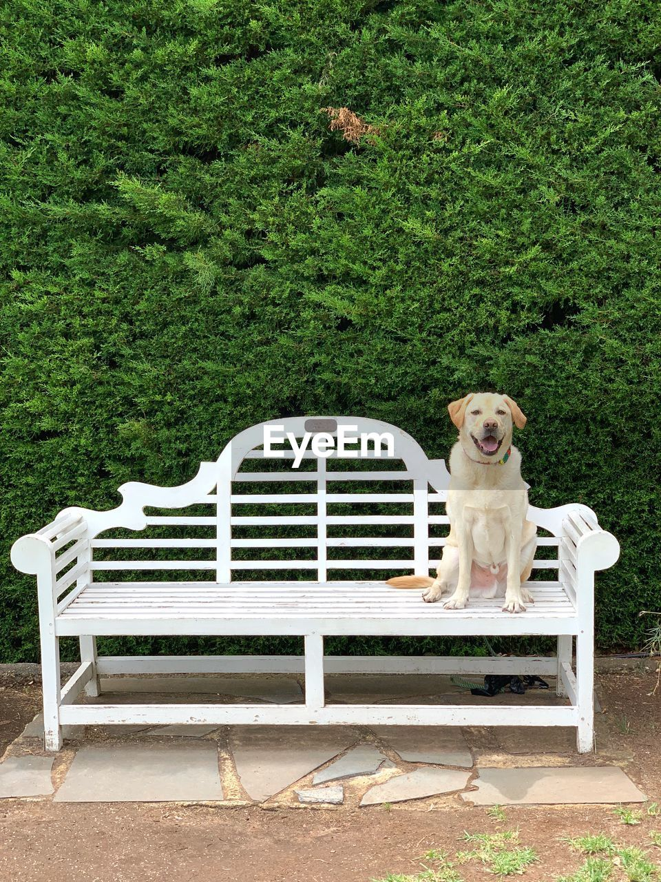 one animal, pets, dog, canine, domestic, seat, mammal, animal themes, animal, bench, domestic animals, plant, sitting, vertebrate, grass, green color, no people, relaxation, day, park, park bench