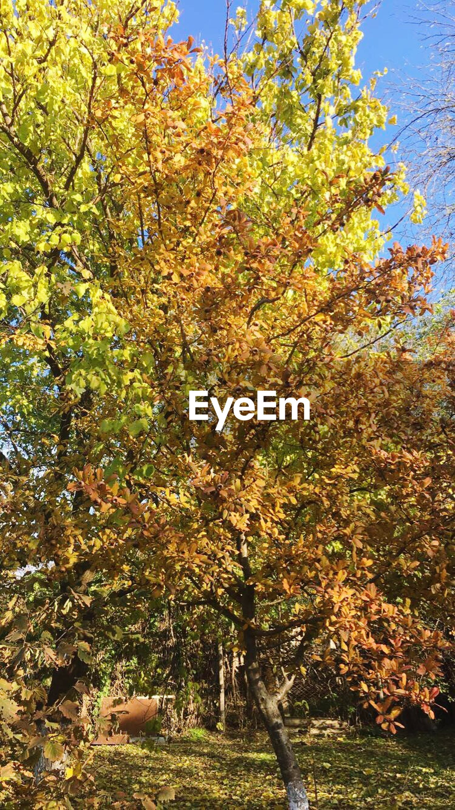 growth, tree, nature, low angle view, beauty in nature, no people, branch, sunlight, outdoors, day, sky, close-up