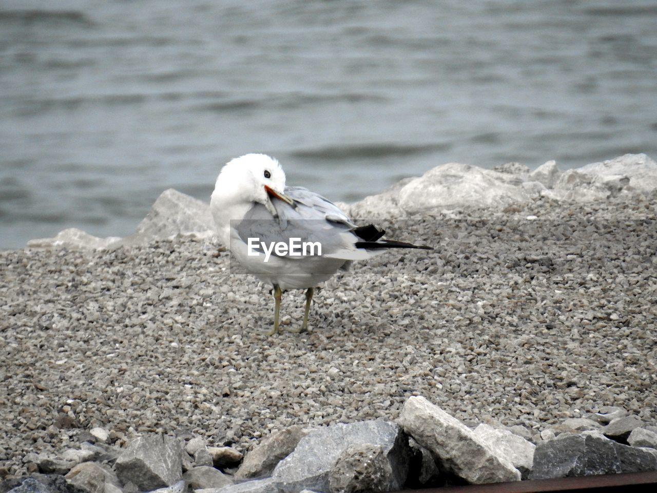 Seagull Perching On Beach
